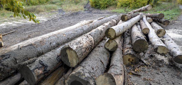 USR scrie istorie în Parlament: A fost votat DNA-ul Pădurilor. Legea merge la promulgare